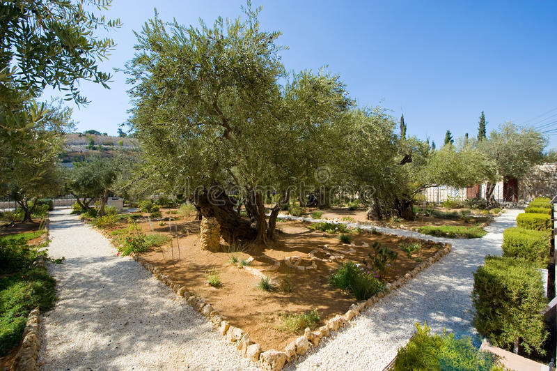 trädgårds- gethsemane royaltyfria bilder
