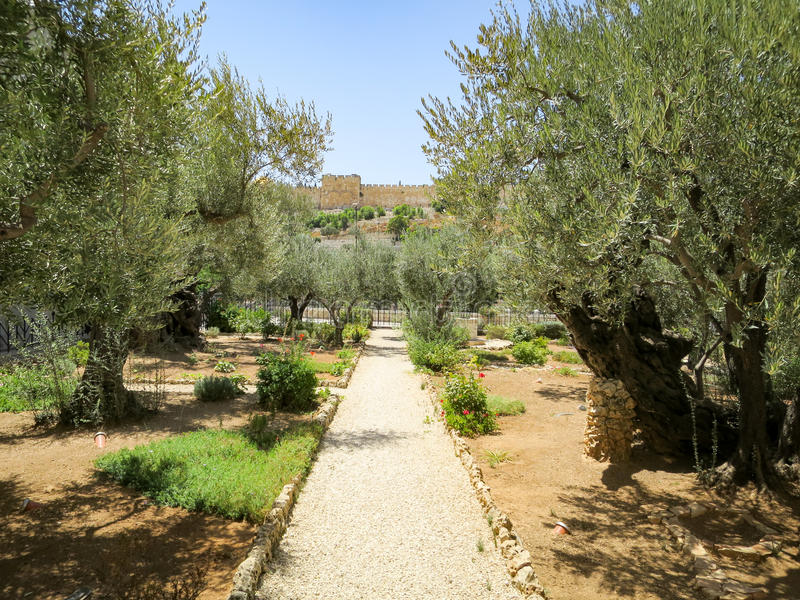 trädgårds- gethsemane arkivfoton