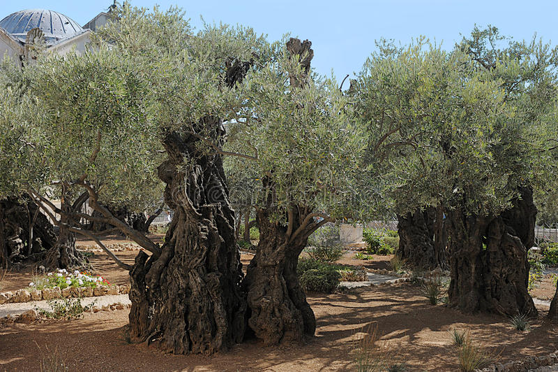trädgårds- gethsemane royaltyfri fotografi