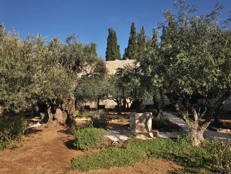 trädgårds- gethsemane jerusalem israel arkivbilder