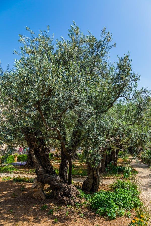 trädgårds- gethsemane arkivbilder