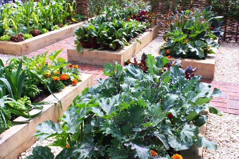 trädgårds- grönsak arkivfoto