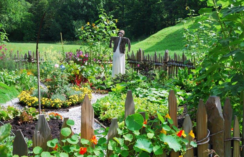 trädgårds- grönsak royaltyfria foton