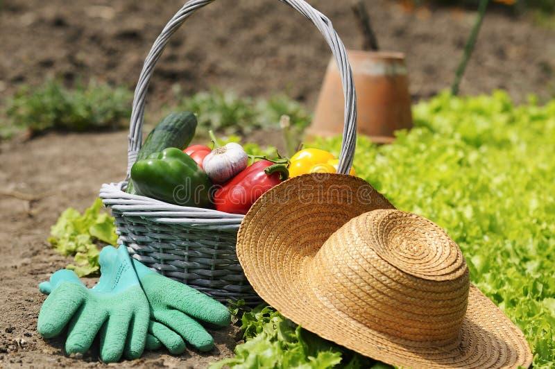 trädgårds- grönsaker arkivfoto