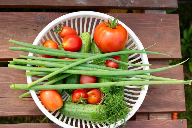 Trädgårds- grönsaker royaltyfri bild