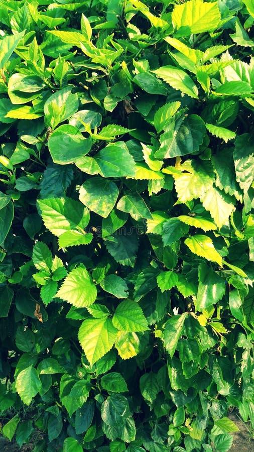 trädgårds- green fotografering för bildbyråer
