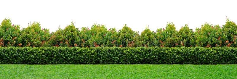 trädgårds- häck arkivbilder