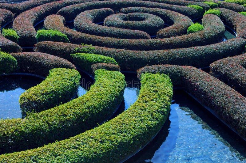 trädgårds- häck royaltyfri foto