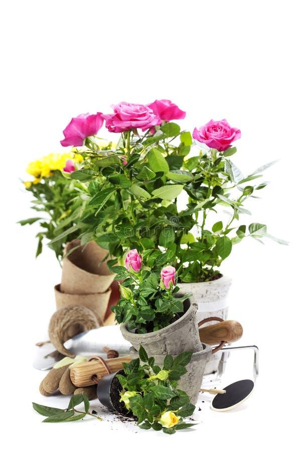 trädgårds- hjälpmedel arkivfoto