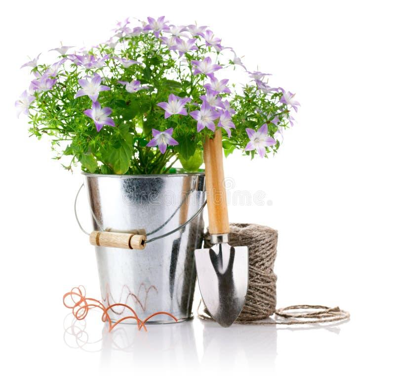 trädgårds- hjälpmedel för hinkblommor royaltyfria bilder