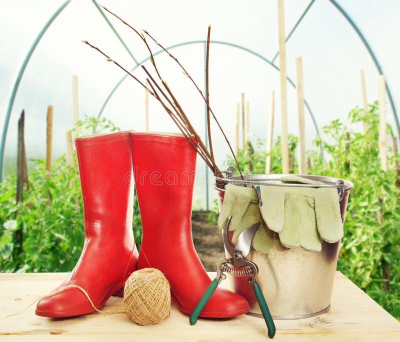 Trädgårds- hjälpmedel med plantor och gummistöveler i en drivhus royaltyfria bilder