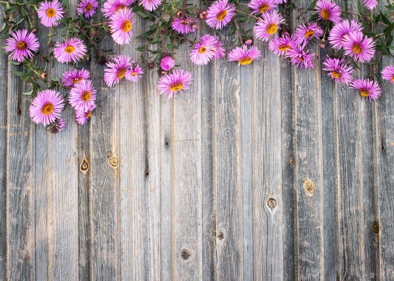 Trädgårds- hrysanthemum på lantlig träbakgrund Retro utformad fl royaltyfria bilder