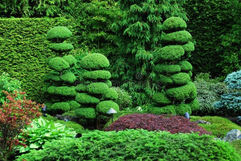 trädgårds- japan fotografering för bildbyråer