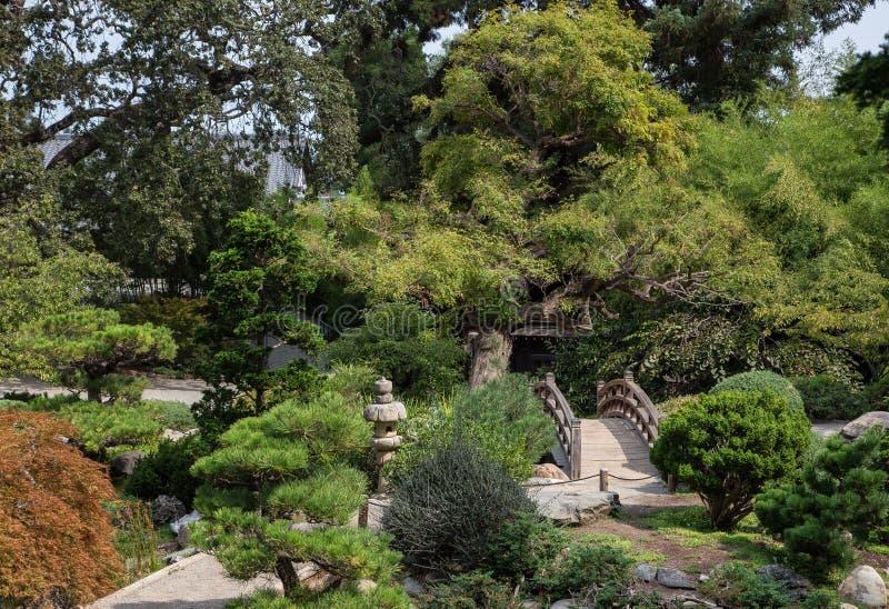 trädgårds- japansk tea royaltyfri foto