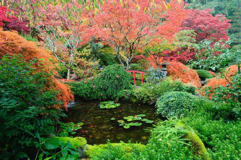 trädgårds- japanskt damm arkivbild