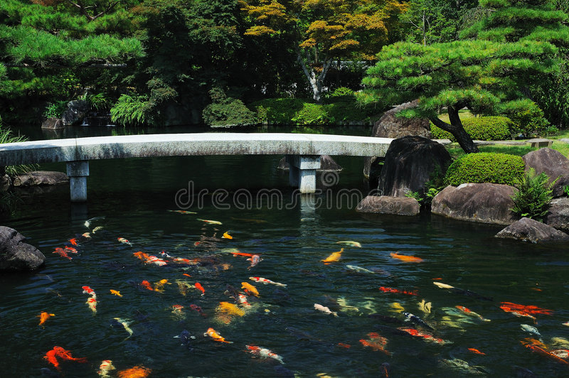 trädgårds- japanskt damm för fisk arkivfoto