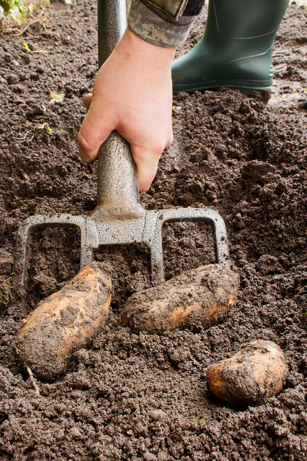 Trädgårds- jordbruksprodukter royaltyfria bilder