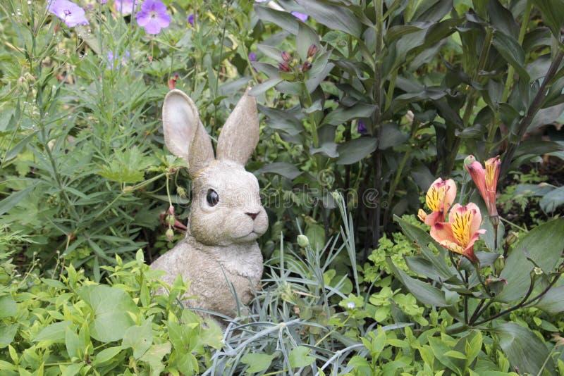 trädgårds- kanin arkivfoton
