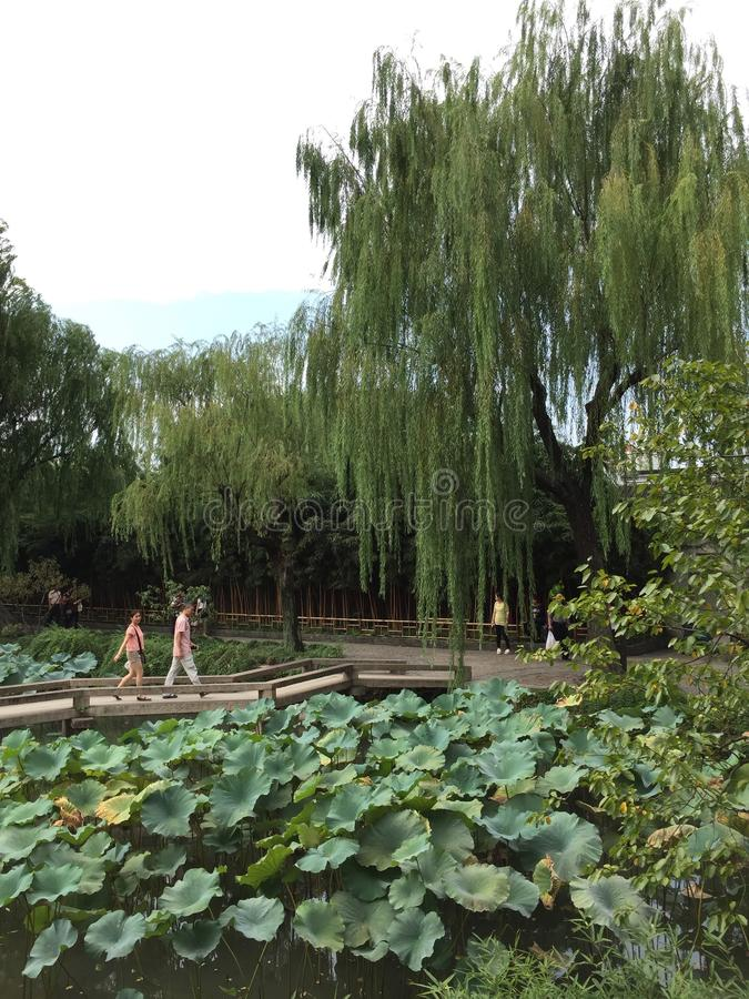 Trädgårds- kinesisk stil arkivfoton
