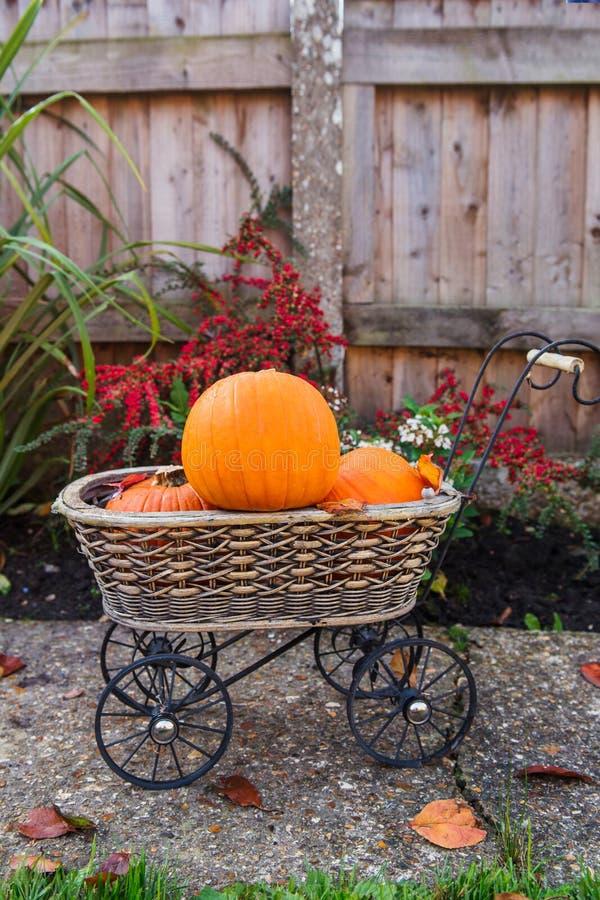 Trädgårds- korg för tappning med små pumpor Höstskörd, tacksägelse, halloween begrepp banta sund mat Selektivt fokusera Co arkivbilder