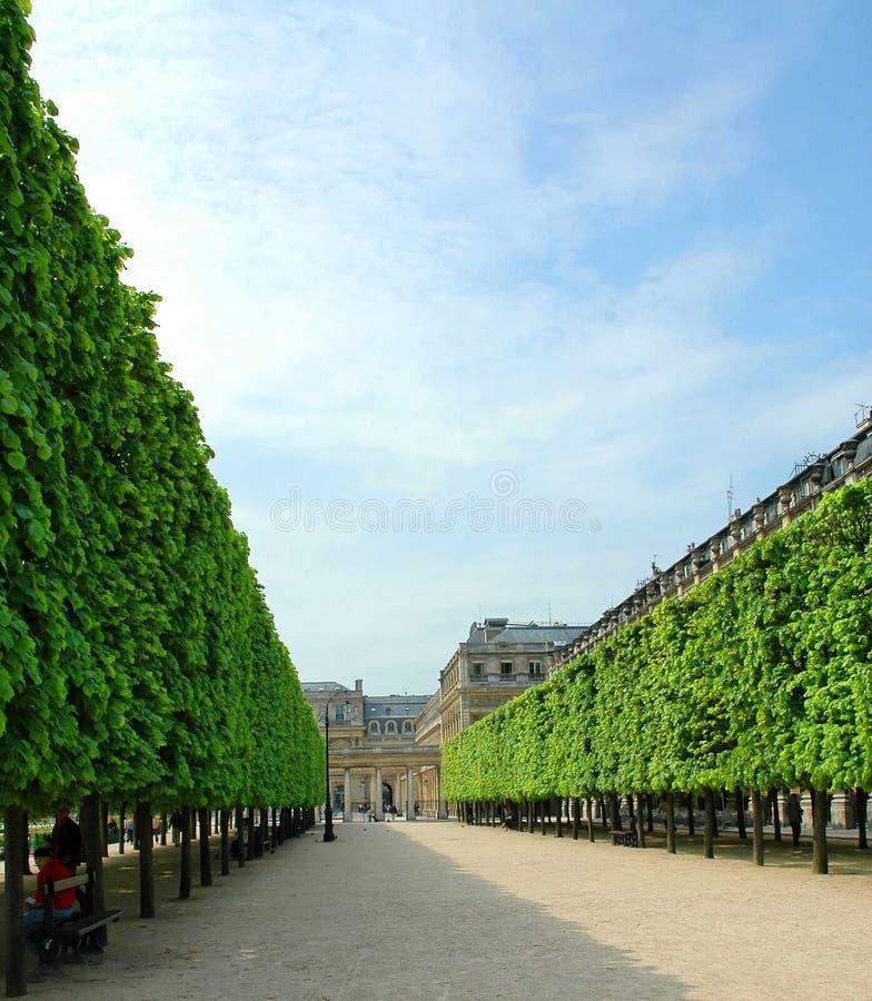 trädgårds- kunglig person för aveny royaltyfri foto