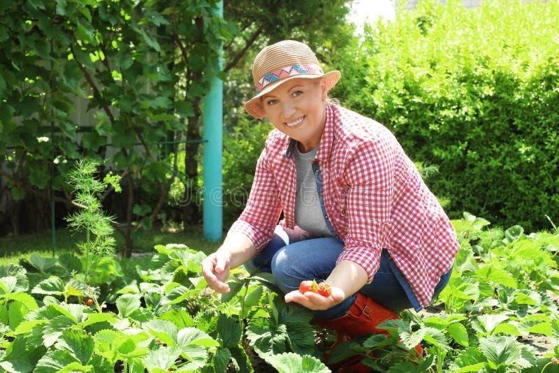trädgårds- kvinnaworking royaltyfria bilder
