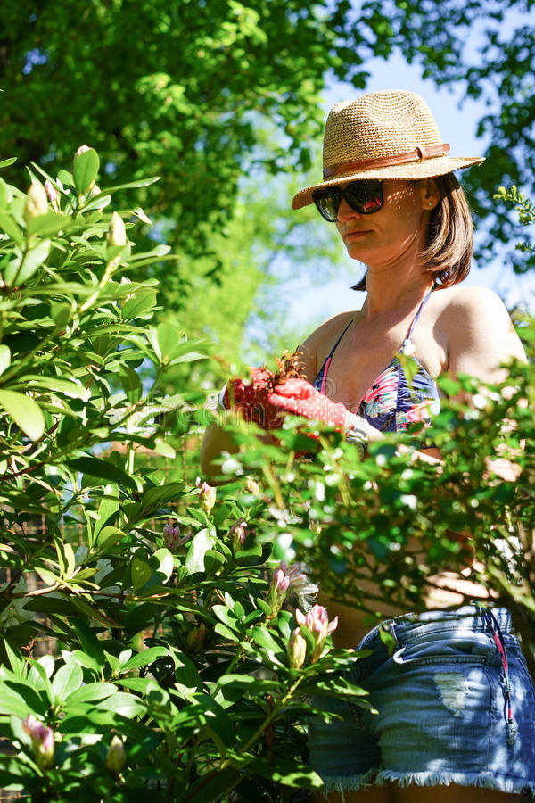 trädgårds- kvinnaworking arkivbilder