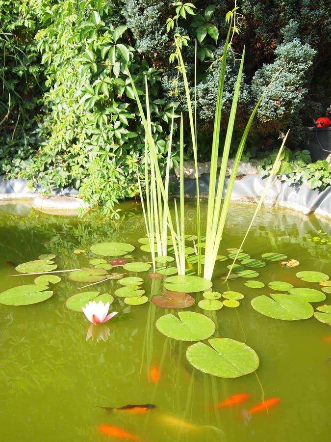 trädgårds- lake royaltyfri foto