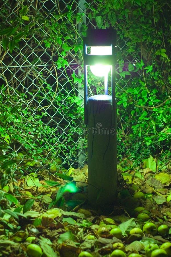 trädgårds- lampnatt arkivbilder