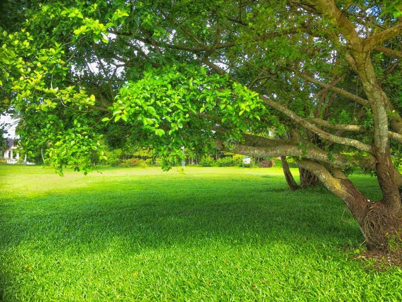 trädgårds- landskaptree för höst arkivbild