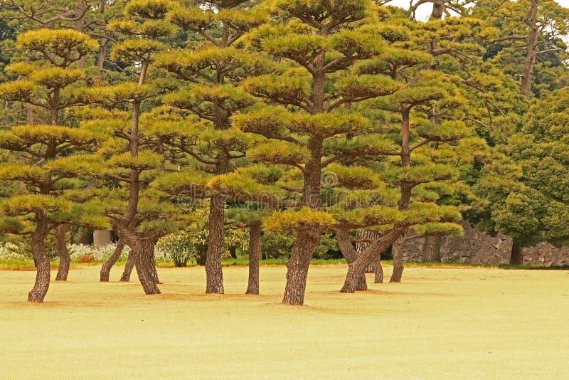 trädgårds- landskaptree för höst arkivbilder