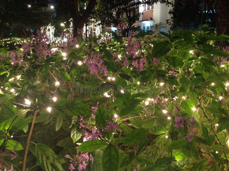 trädgårds- lighting royaltyfria bilder