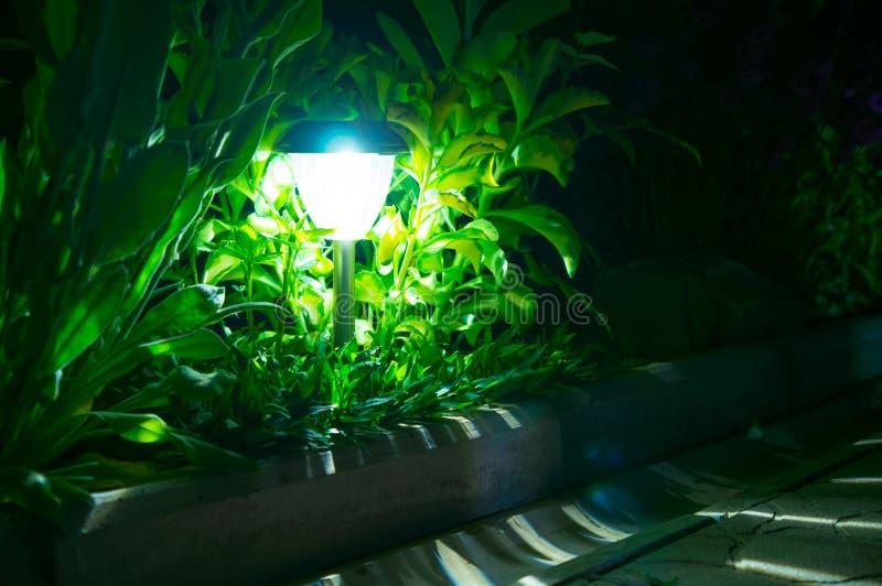 Trädgårds- ljus för sol- lyktor med buskar royaltyfria foton