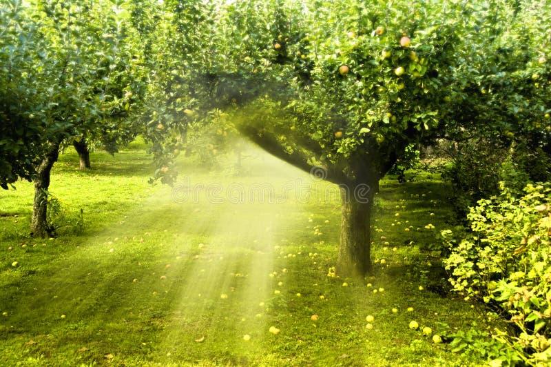 trädgårds- magi arkivfoto
