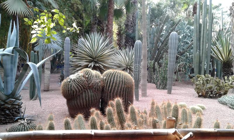 trädgårds- majorelle royaltyfri bild