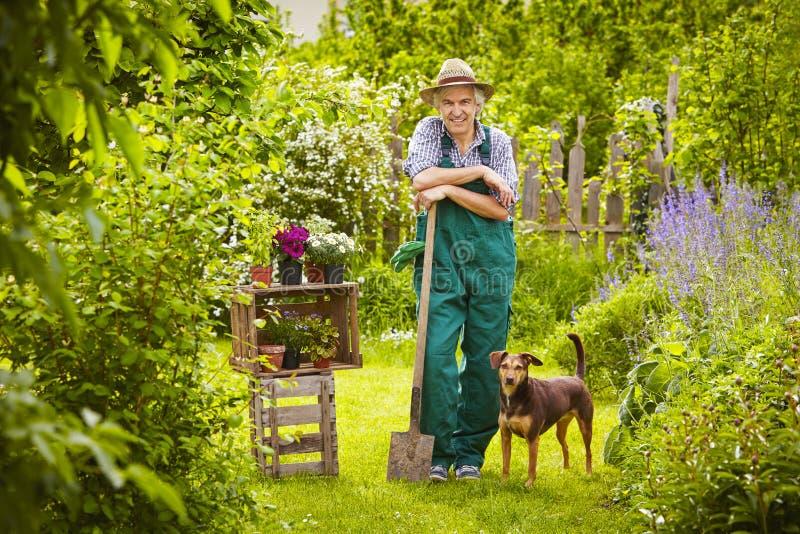 Trädgårds- manhund royaltyfria bilder