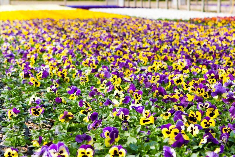 Trädgårds- mitt fotografering för bildbyråer