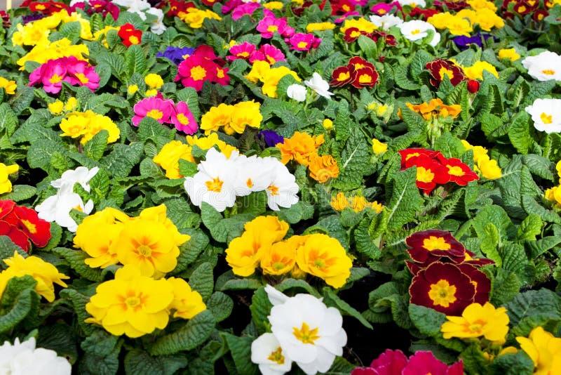 Trädgårds- mitt royaltyfri fotografi