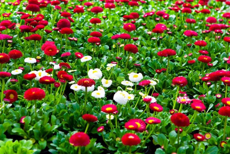 Trädgårds- mitt royaltyfria foton