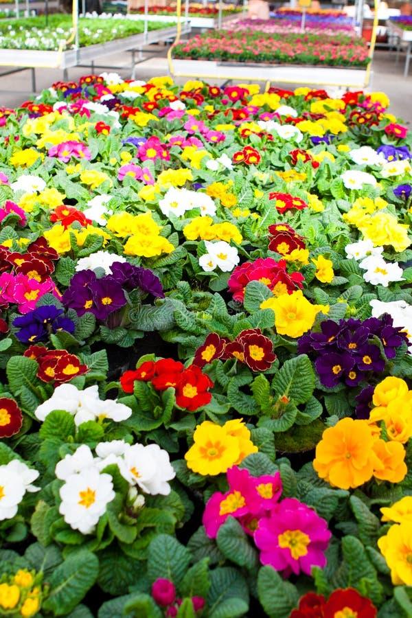 Trädgårds- mitt royaltyfria bilder