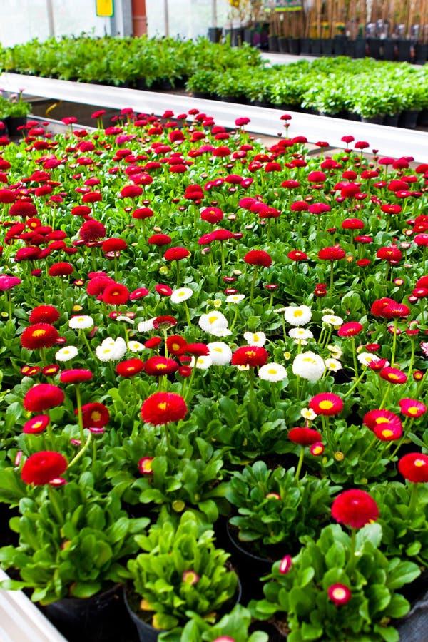 Trädgårds- mitt arkivfoton