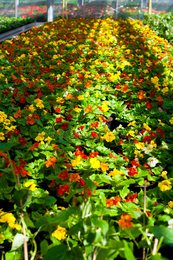 Trädgårds- mitt arkivfoto