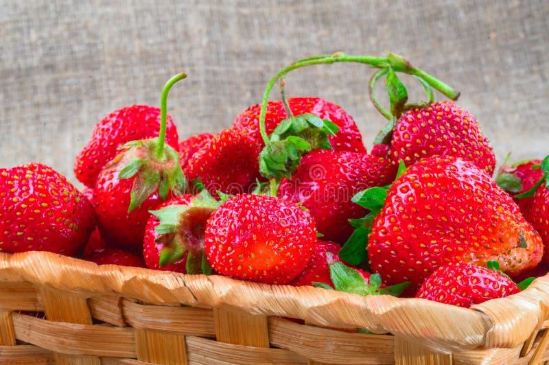 Trädgårds- mogna ljusa röda jordgubbefrukter Stora saftiga jordgubbar i vide- korg på säckvävtygbakgrund arkivbild