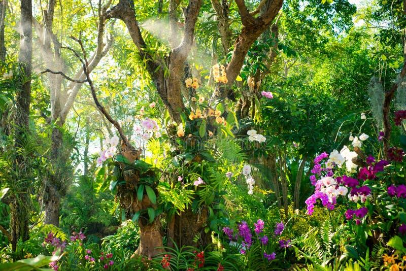 trädgårds- orchid royaltyfria bilder