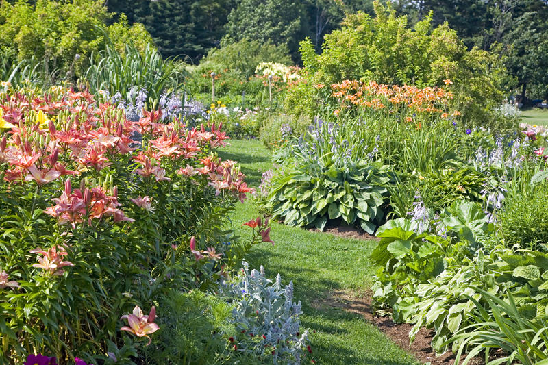 trädgårds- perenn arkivbild