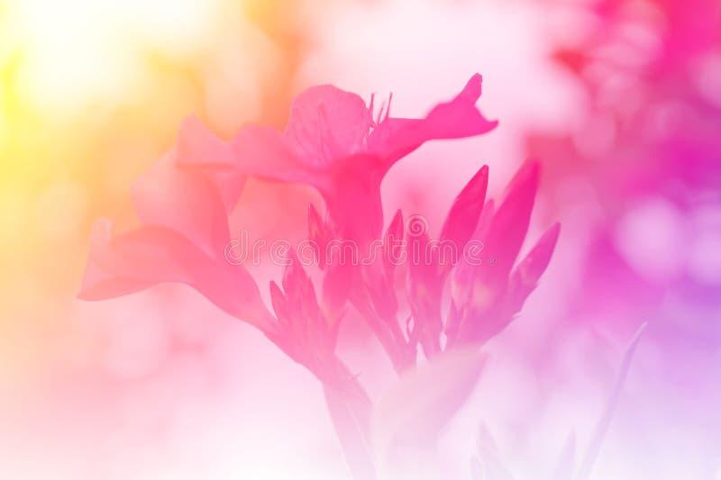 trädgårds- pink för blomma arkivbild