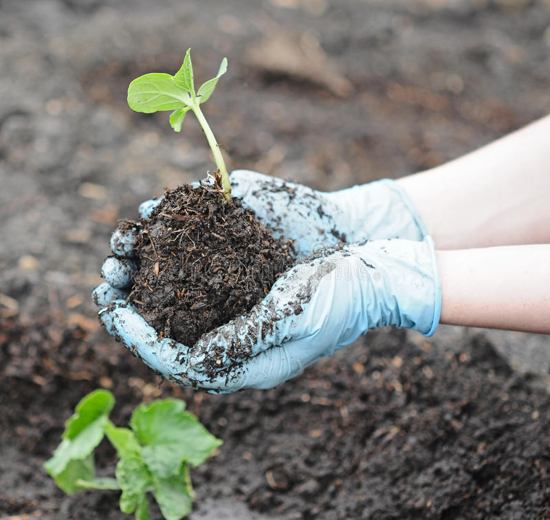 trädgårds- plantera fjäderarbete arkivbild