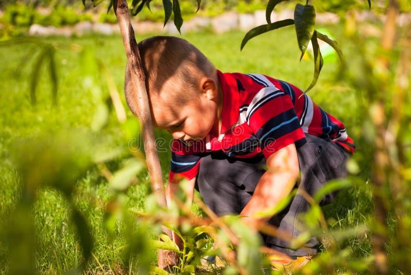 trädgårds- pojke little royaltyfri foto