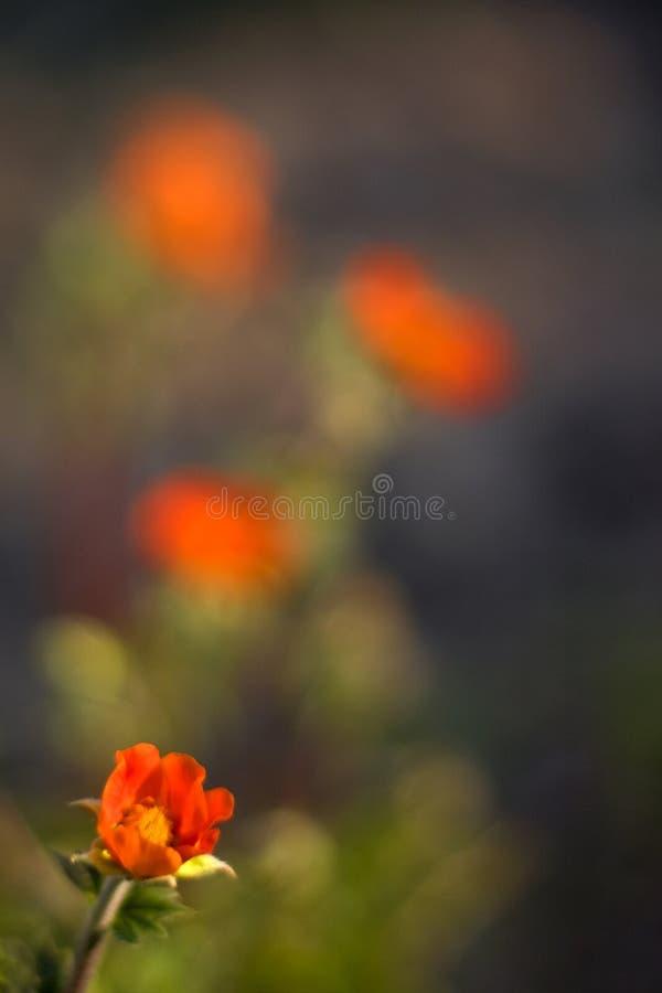trädgårds- red för blomma arkivfoto