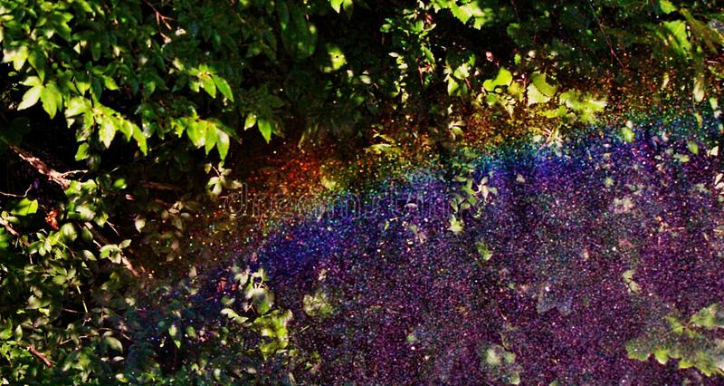 trädgårds- regnbåge royaltyfri foto